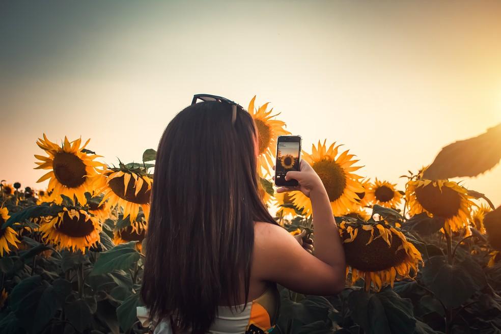 Fotógrafa fez promoção para ensaio fotográfico com girassóis em Cerquilho — Foto: Mirelle Reis/Divulgação