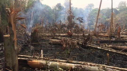 Foto: (Reprodução / Amazônia Real)