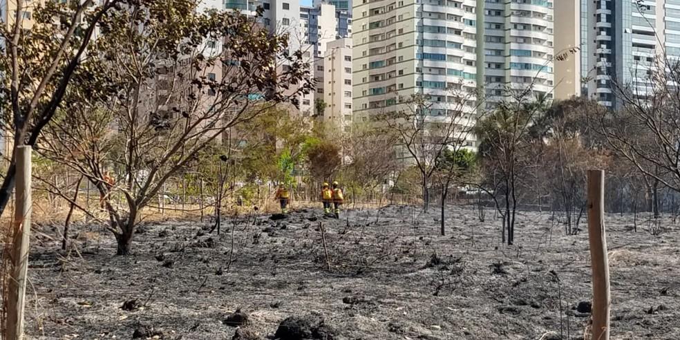 Bombeiros atuam em incêndio florestal no Parque Ecológico de Águas Claras, no DF — Foto: Corpo de Bombeiros/Divulgação