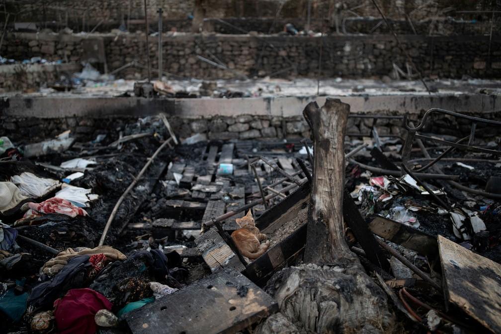 14 de setembro - Um gato é visto entre tendas queimadas após incêndios destruírem o centro de refugiados de Moria, na ilha de Lesbos, Grécia — Foto: Alkis Konstantinidis/Reuters