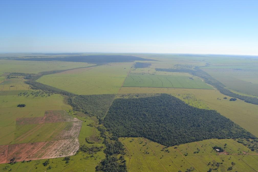 Corredores Ecológicos são formados no Pontal do Paranapanema  — Foto: Laury Cullen Junior