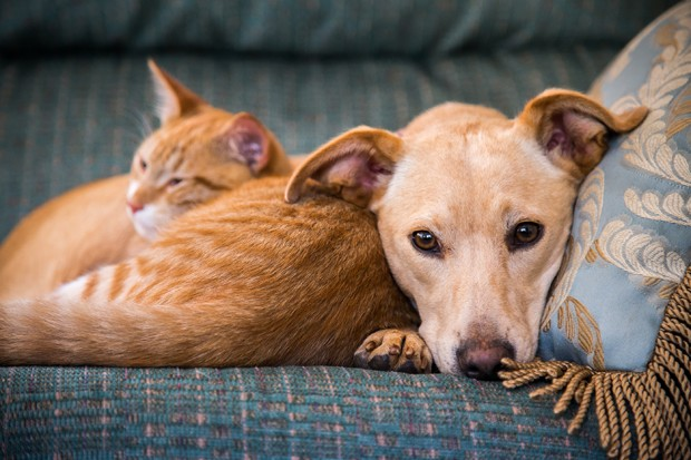 Close up, cute cat and dog together lying in the bed (Foto: Getty Images/iStockphoto)