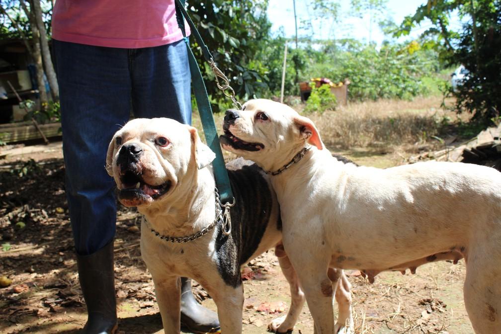 Casal de cachorros foi abandonado em uma chácara, e resgatado em uma via rural — Foto: Cássia Firmino/G1