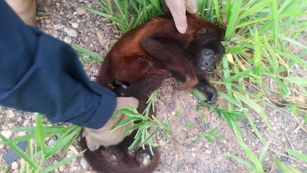 Macaco foi resgatado às margens da BR-435.  — Foto: Divulgação/PRF