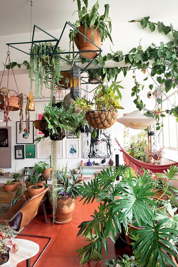 Lifestyle decor - O jardim de vasos (Foto: Carol Gherardi)
