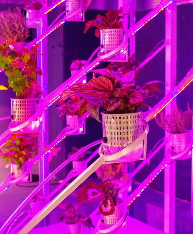 As plantas são alimentadas por meio da hidroponia, uma tecnologia que permite com que a vegetação se desenvolva sem terra (Foto: Deezen/ Reprodução)