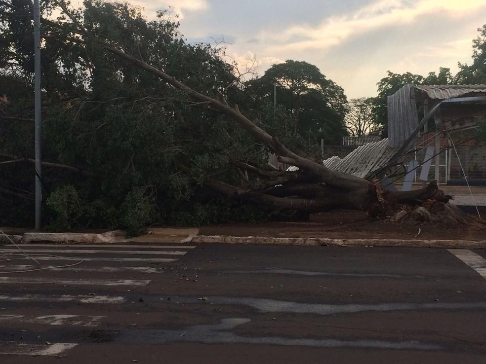 Árvore caiu em telhado e derrubou fiação (Foto: Maureen Mattiello/TV Morena)