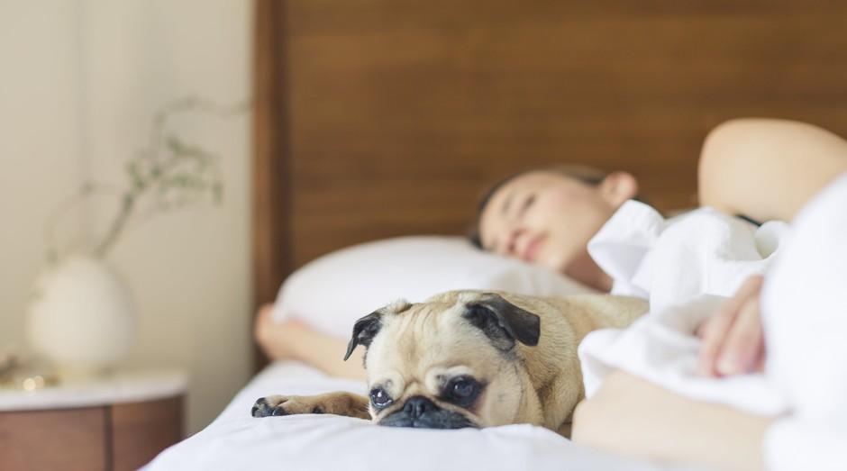 dormir, cama, cachorro, sono (Foto: Reprodução/Pexels)
