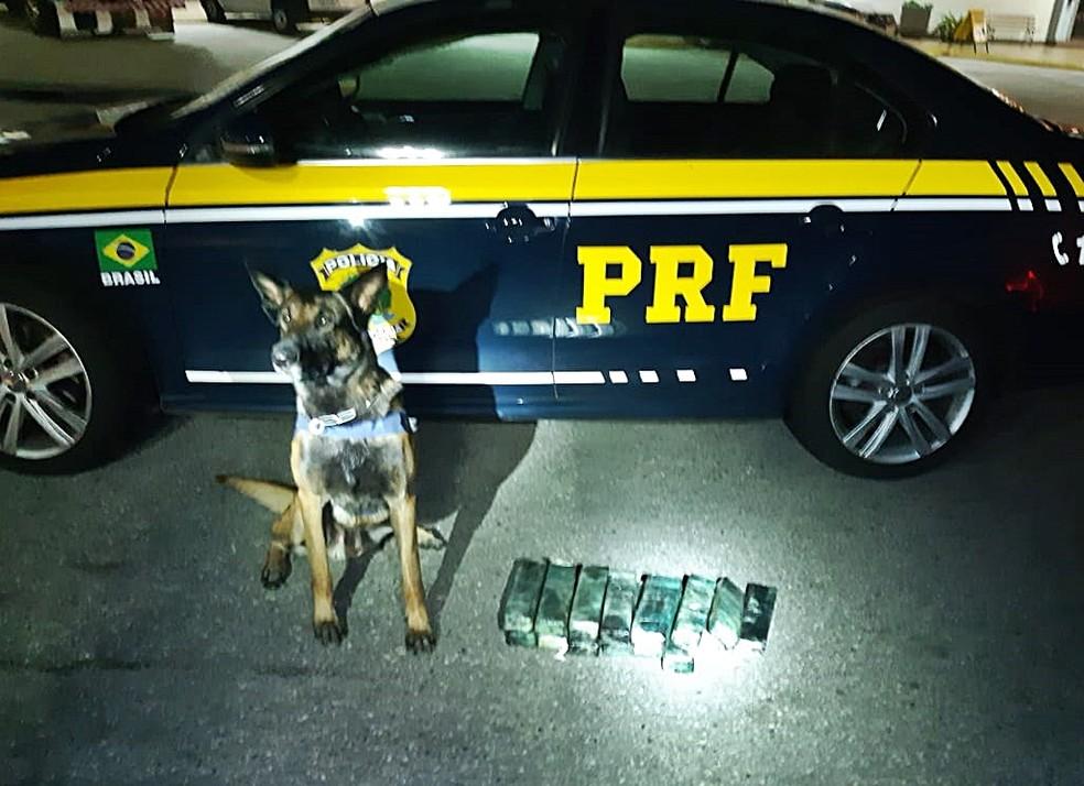 Polícia apreendeu 15 tabletes de maconha dentro de ônibus em São Gonçalo do Sapucaí (MG) — Foto: Polícia Rodoviária Federal