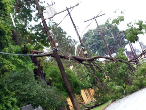 Quedas de árvores e galhos provocaram o rompimento da fiação de energia elétrica (Foto: Heitor Medina/Bela Vista MS News)