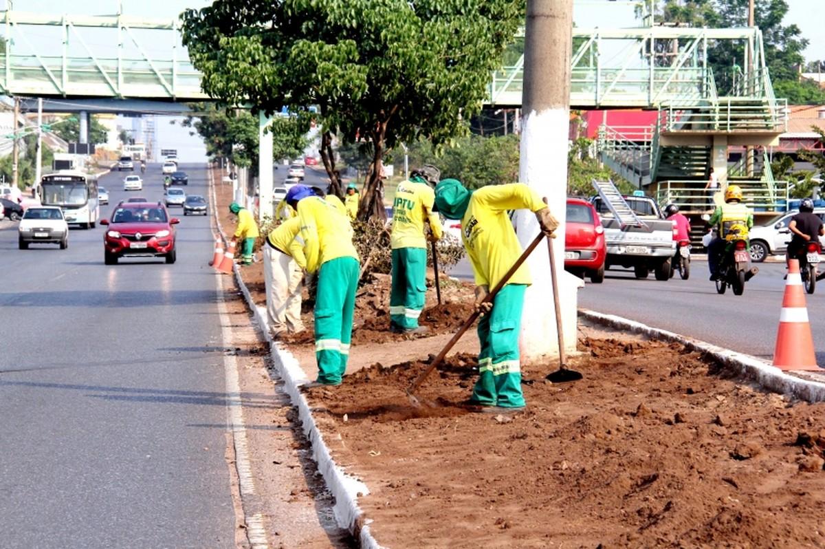 MP cobra informações de prefeito sobre plantação de palmeiras em canteiros do VLT em Cuiabá