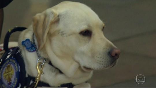 Conheça o treinamento de cães que dão suporte emocional, como o Sully, fiel companheiro de George H.W. Bush