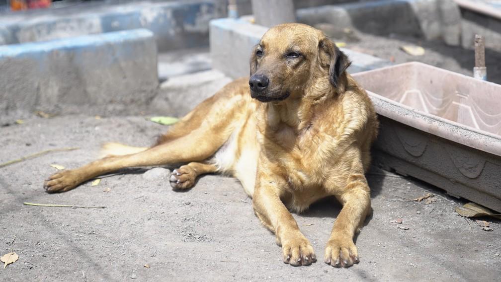Segundo protetores, vira-latas e cães com características comuns são menos adotados — Foto: Affonso Andrade/ G1