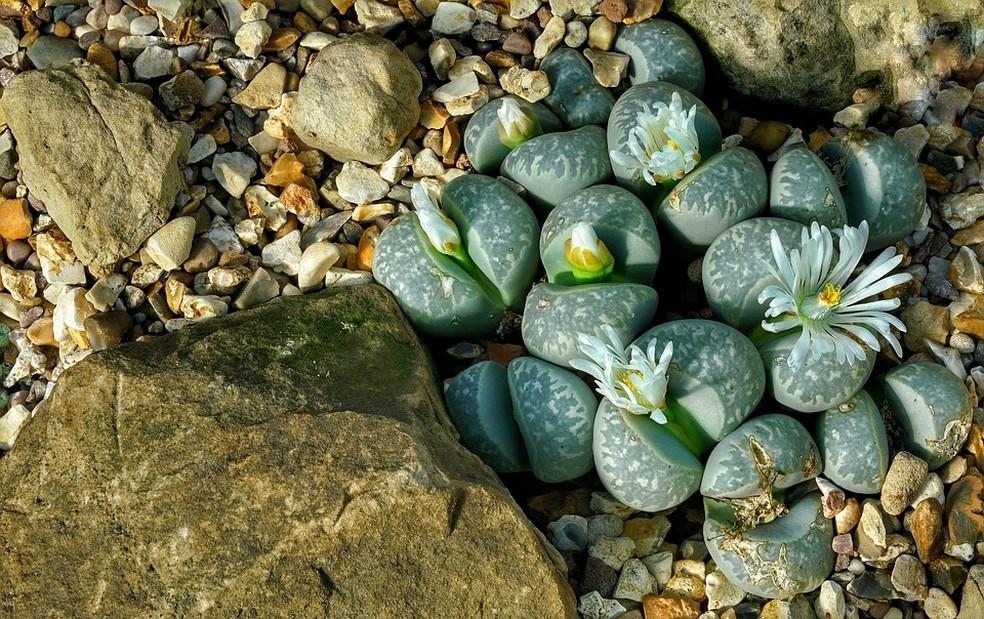 Elas poderiam resistir em Marte e viver por 32 mil anos: conheça as plantas mais fortes do mundo