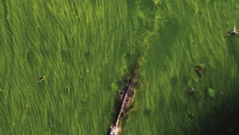 pantanal-jacare (Foto: José Medeiros/Ed. Globo)