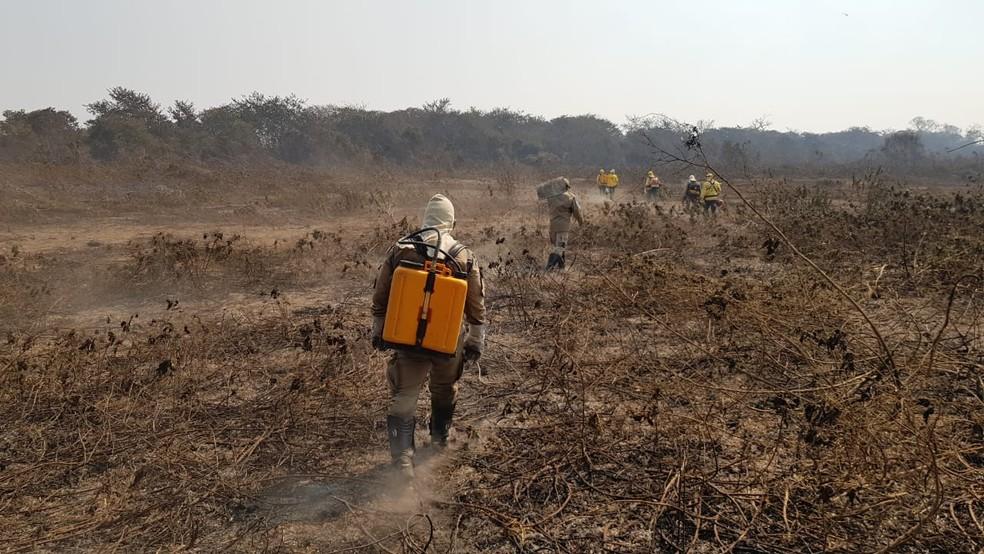 Equipes do Corpo de Bombeiros e Prevfogo do Ibama fazem combate a queimadas no Pantanal de Mato Grosso do Sul — Foto: Corpo de Bombeiros/Divulgação
