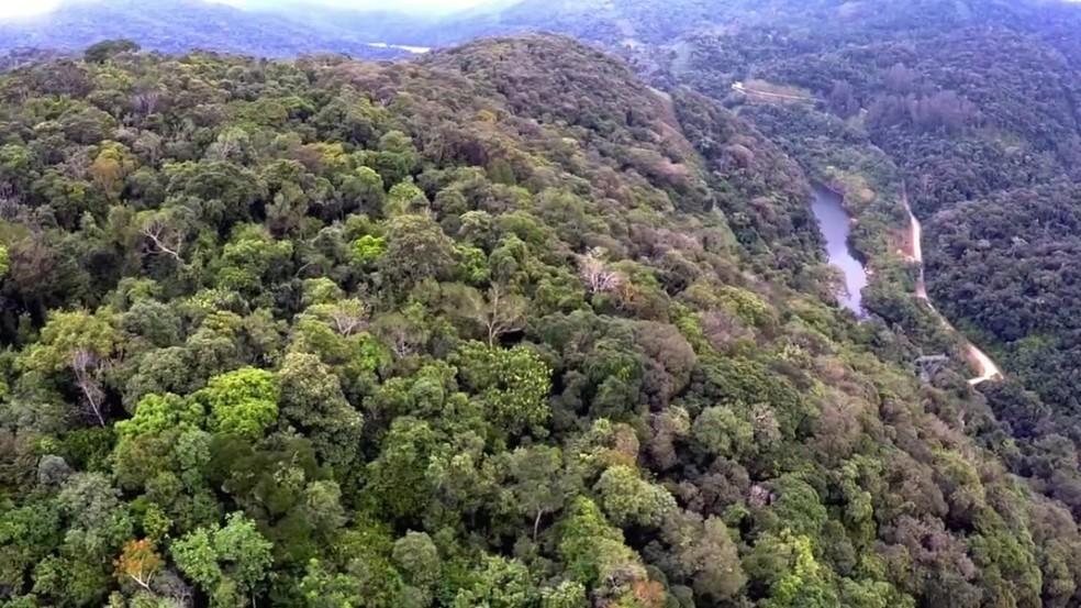Área de preservação de Mata Atlântica, em Tapiraí (SP), ajuda a preservar espécies de orquídeas nativas — Foto: Reprodução/TV TEM