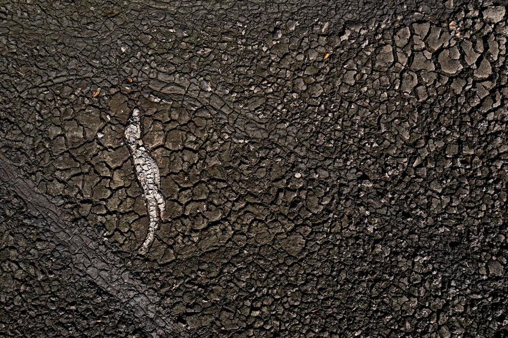 Tanque de água seco com jacaré morto após grande seca em agosto de 2021 — Foto: Ricardo Martins