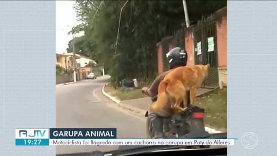 Cachorro se equilibra em garupa de moto em Paty do Alferes