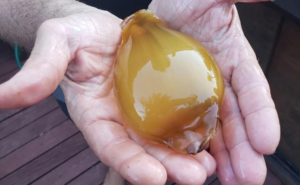 Pesquisador afirma que o 'ovo' é fresco — Foto: Ana Clara Marinho/TV Globo