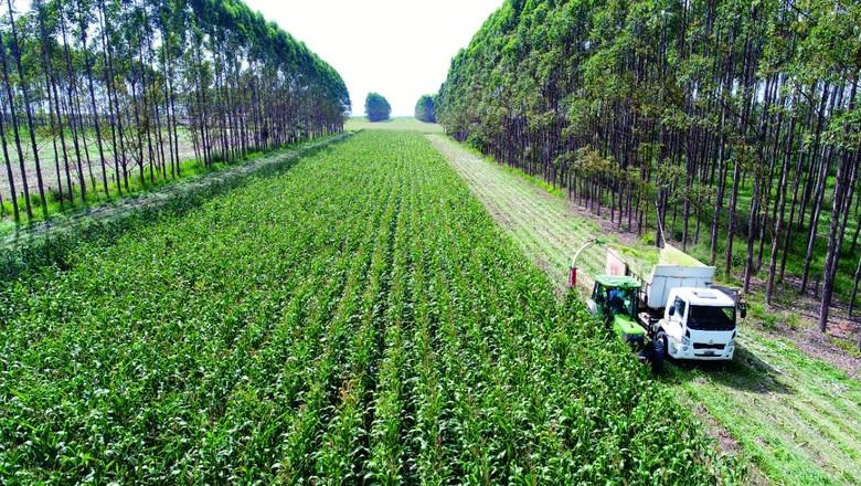 A sustentabilidade do sistema de integração lavoura-pecuária atrai investimentos (Foto: Gabriel Faria/Embrapa)