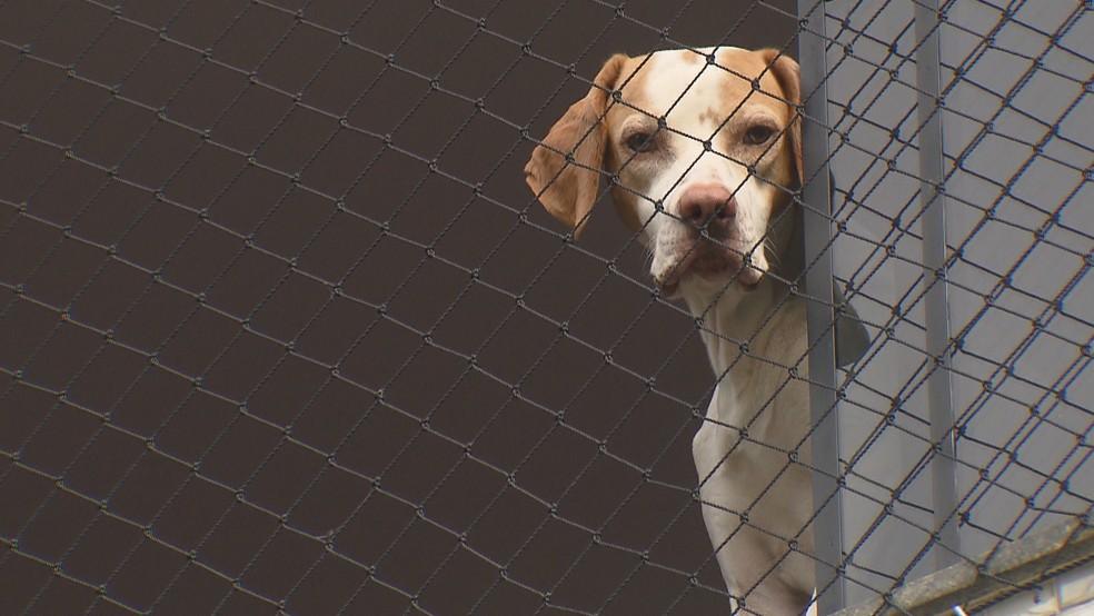 Cachorro na janela de moradora que quer manter grade de nylon — Foto: Reprodução/TV Globo