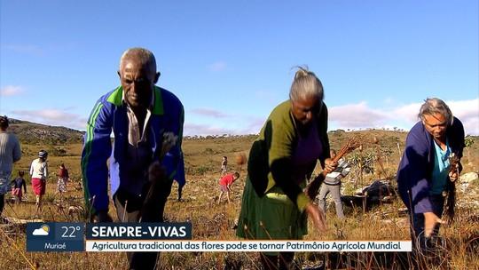 Agricultura tradicional de flores pode se tornar patrimônio agrícola mundial