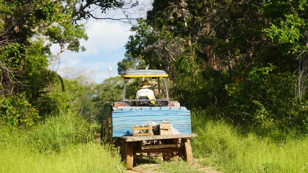165 cachos retirados do Pantanal — Foto: Gabriela Schuck