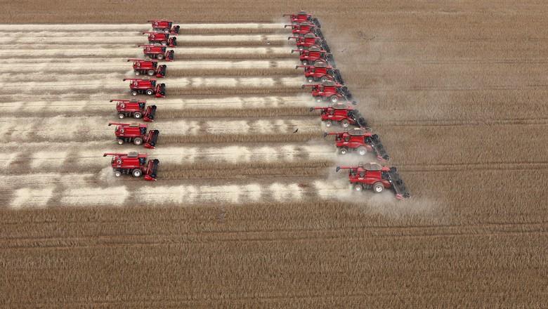 Trabalhos de colheita de soja em Tangará da Serra, Cuiabá  (Foto: REUTERS/Paulo Whitaker)