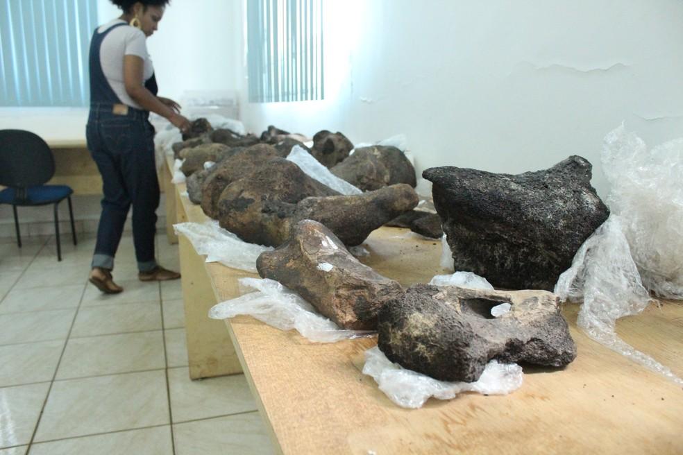 A diretora do Museu da Memória Rondoniense, Ednair Nascimento, diante dos fósseis de preguiça gigante. — Foto: Pedro Bentes/G1