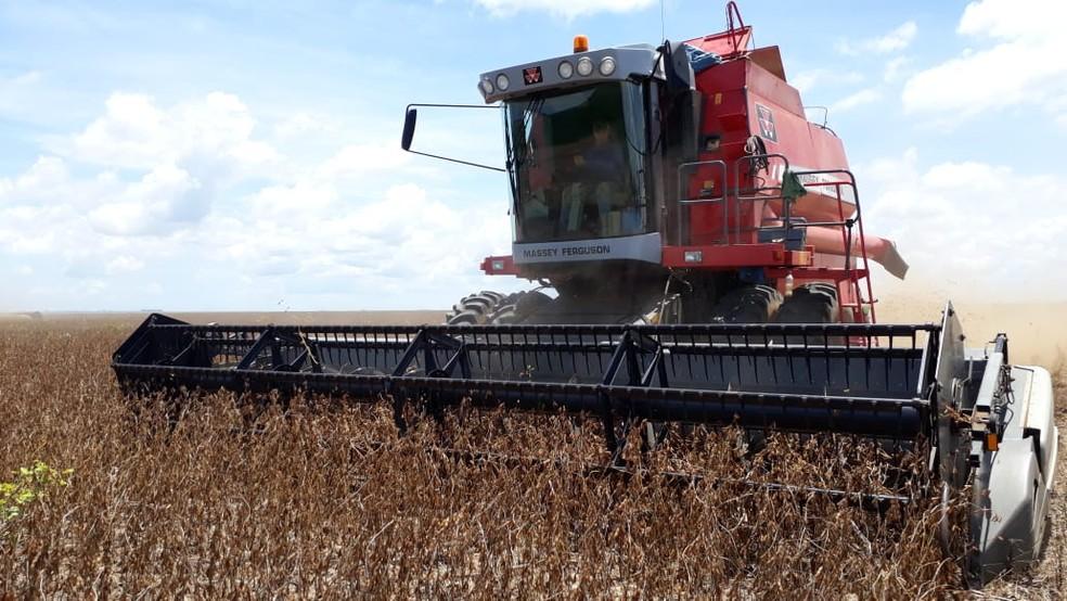 Colheita de soja em Sorriso (MT) — Foto: Bruno Bortolozo/TVCA