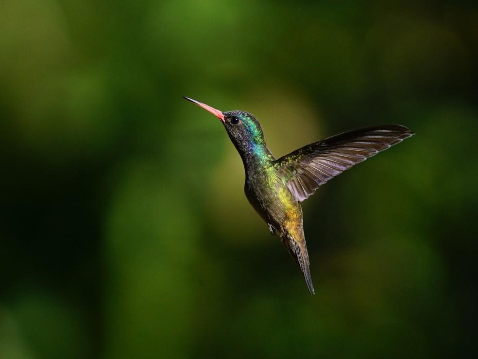 Grandes personalidades se inspiraram nas aves (Foto: Ananda Porto/ TG)