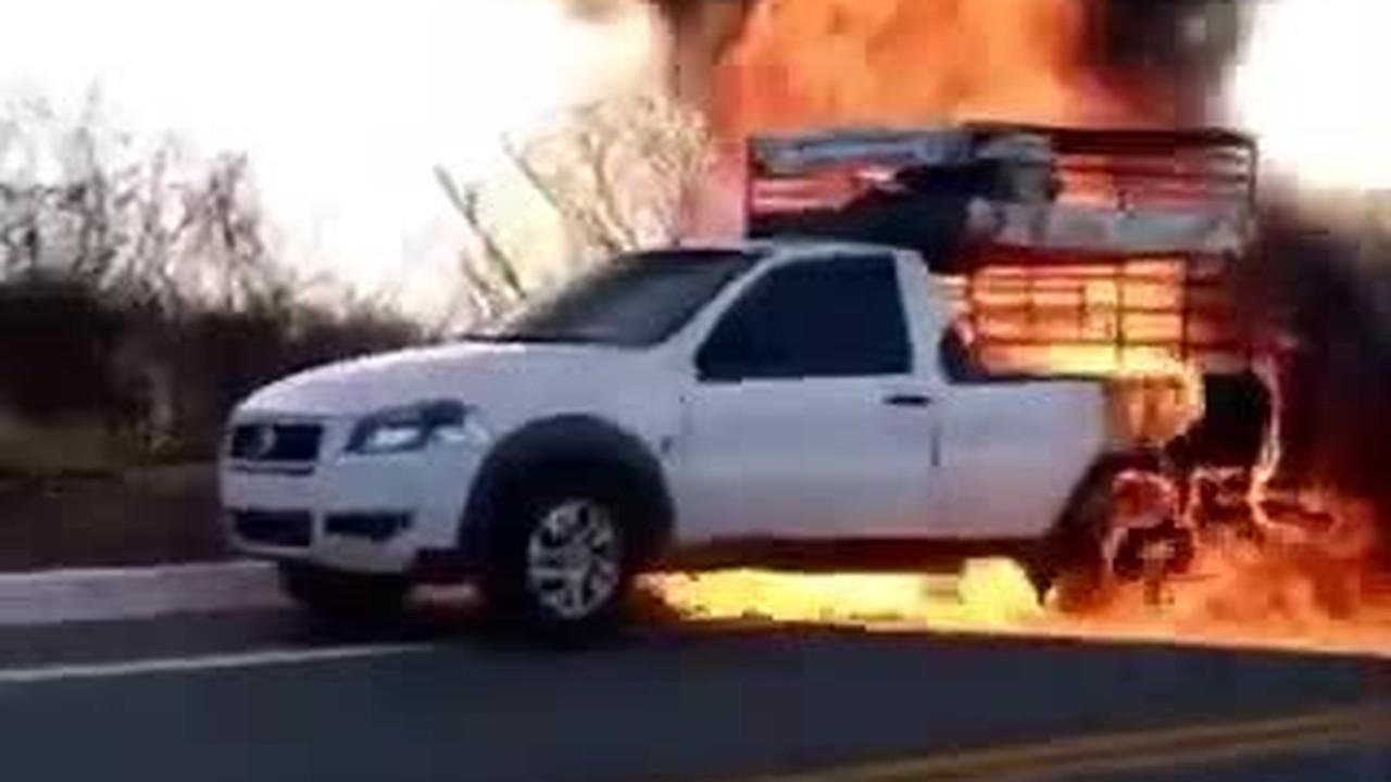 Animais morrem carbonizados depois que carro onde eram transportados pega fogo