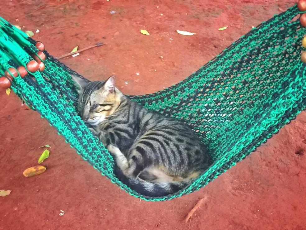 """Miau passa os dias deitado em uma rede na praça em Campo Grande, e virou atração: """"Somos inseparáveis"""", diz dono — Foto: Flávio Dias/G1MS"""