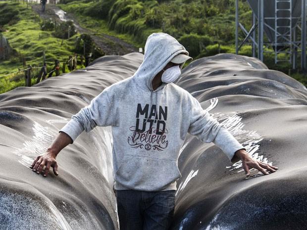 Fazendeiro mostra cinzsa do vulcão Turrialba sobre lonas que protegem as colheitas em San Gerardo de Irazu (Foto: Ezequiel Ibecerra/AFP)