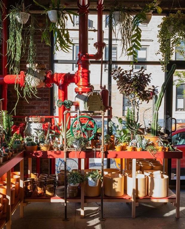 Conheça a Tula Plants & Design, loja de NY especializada em cactos (Foto: Divulgação)