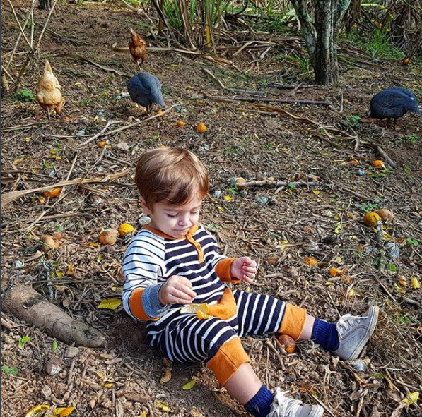 Rocco entre bergamotas e galinhas, brincando livremente (Foto: Reprodução Instagram)