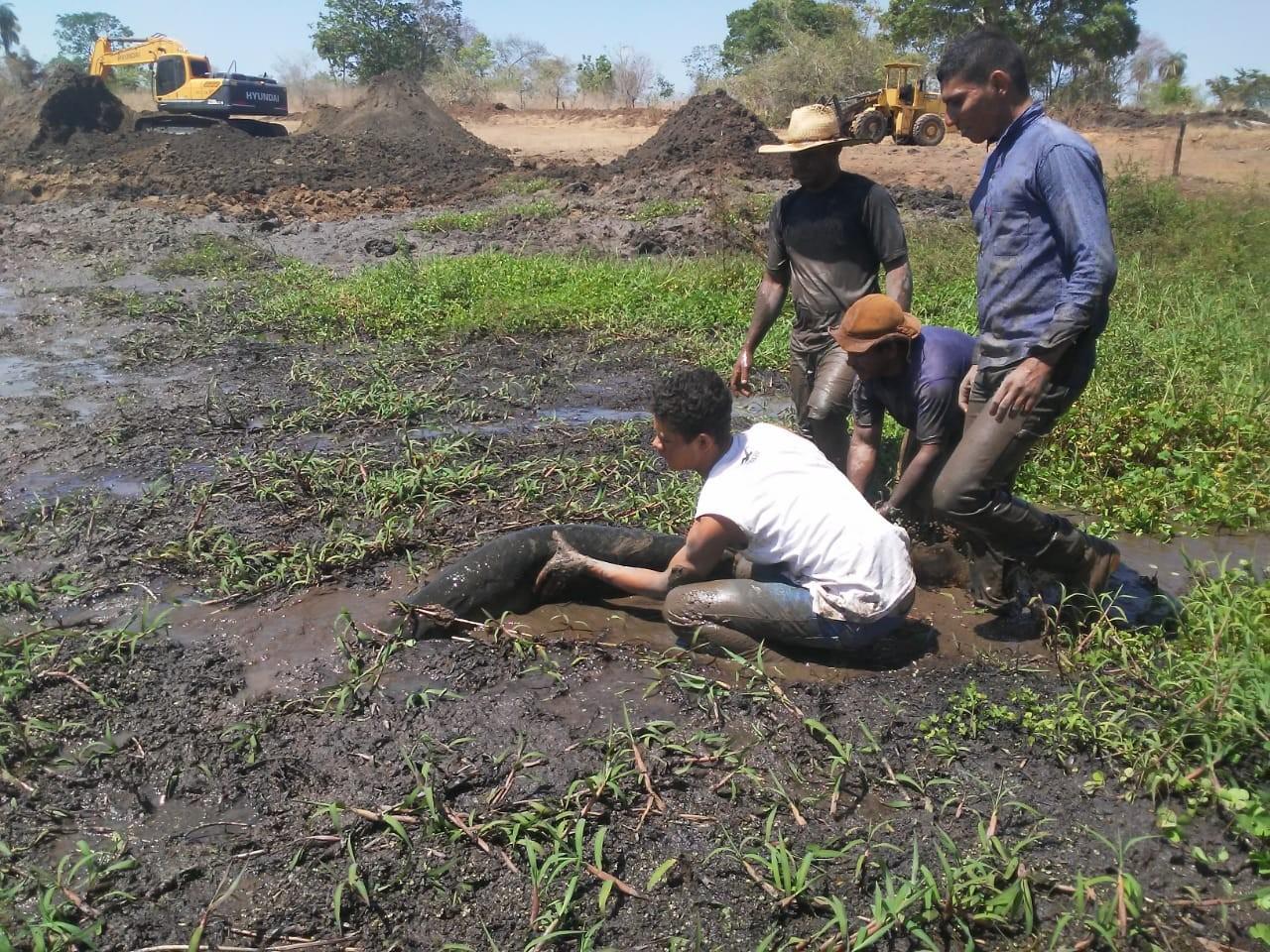 Lago é escavado para salvar peixes presos na lama em Talismã; veja o vídeo - Notícias - Plantão Diário