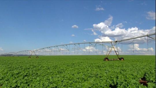 Conab prevê colheita de mais de 5,7 milhões de toneladas de milho em MG
