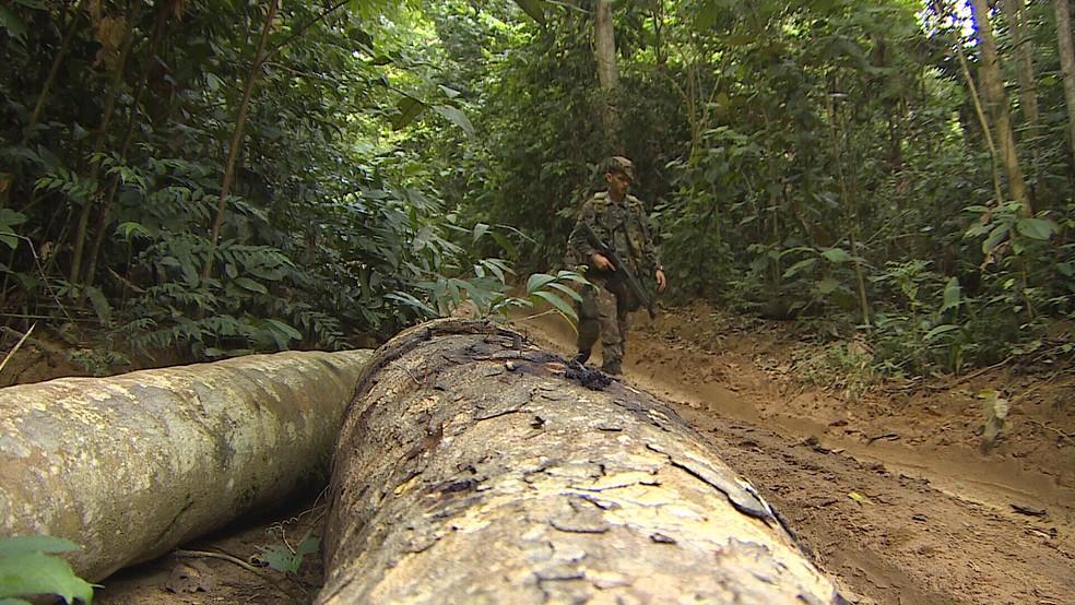 Principais acessos à reserva Karipuna foram bloqueados durante fiscalização em RO  — Foto: Rede Amazônica/ Reprodução