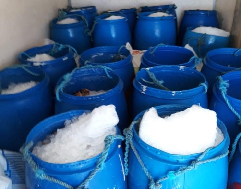 Material apreendido era mantido em baldes de gelo — Foto: Divulgação