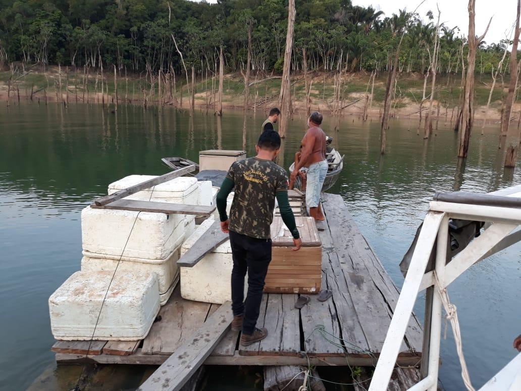 Operação apreende mais de uma tonelada de pescado em Tucuruí, no sudeste do Pará - Noticias