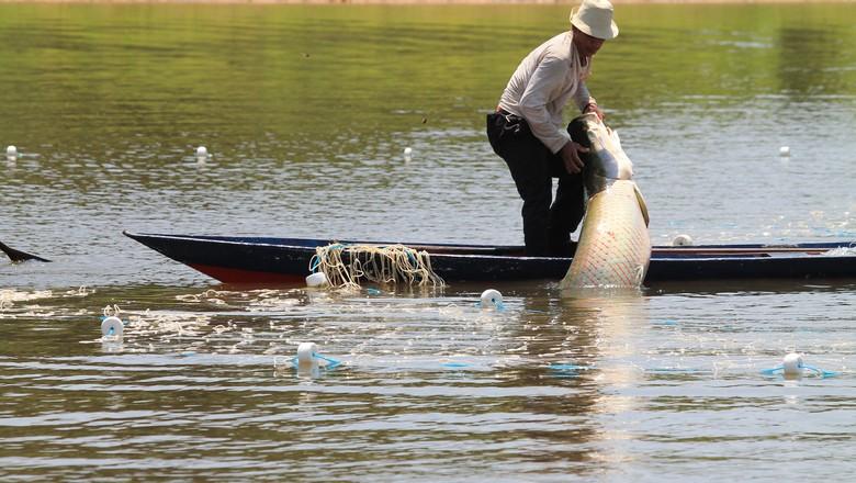 pirarucu-peixe-pesca-amazonas (Foto: Clovis Miranda/FAS)