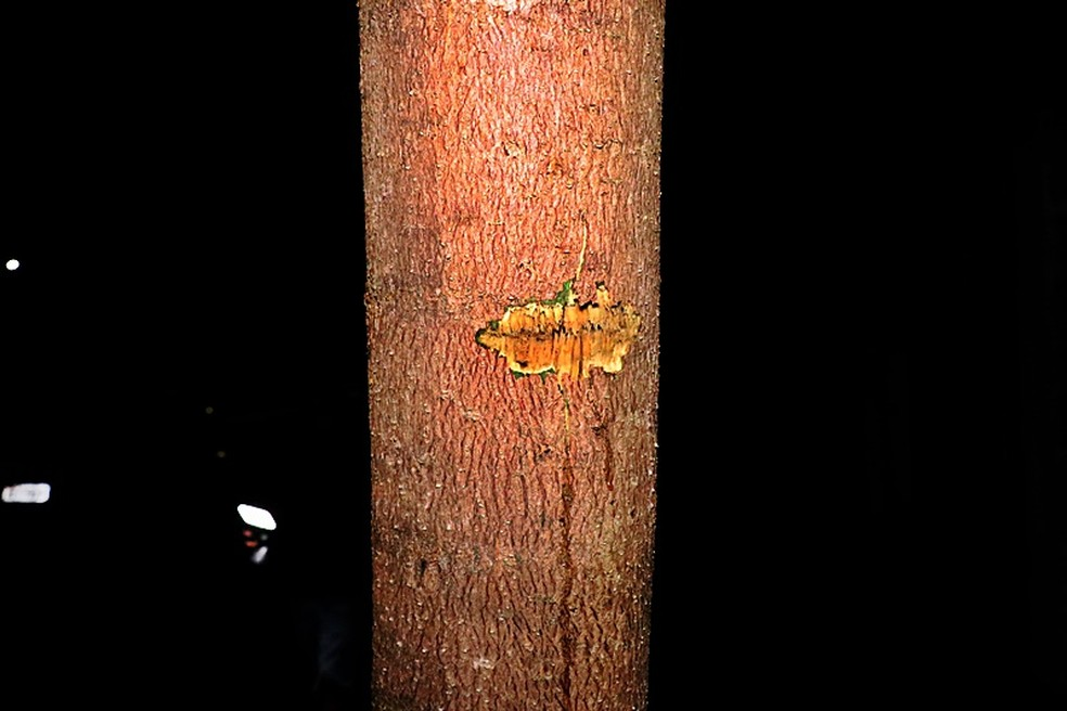 Até uma árvore foi alvo dos disparos em Nova Mutum — Foto: Djeferson Kronbauer/Power Mix