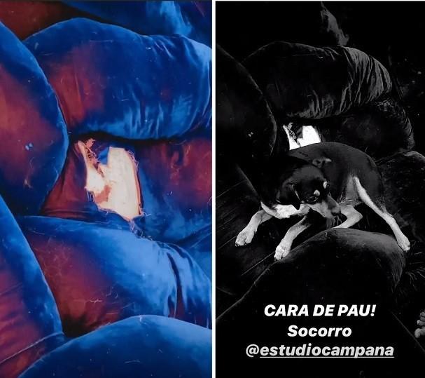 Bruno Gagliasso reforma sofá de R$ 500 mil destruído por cachorro (Foto: Reprodução/Instagram)