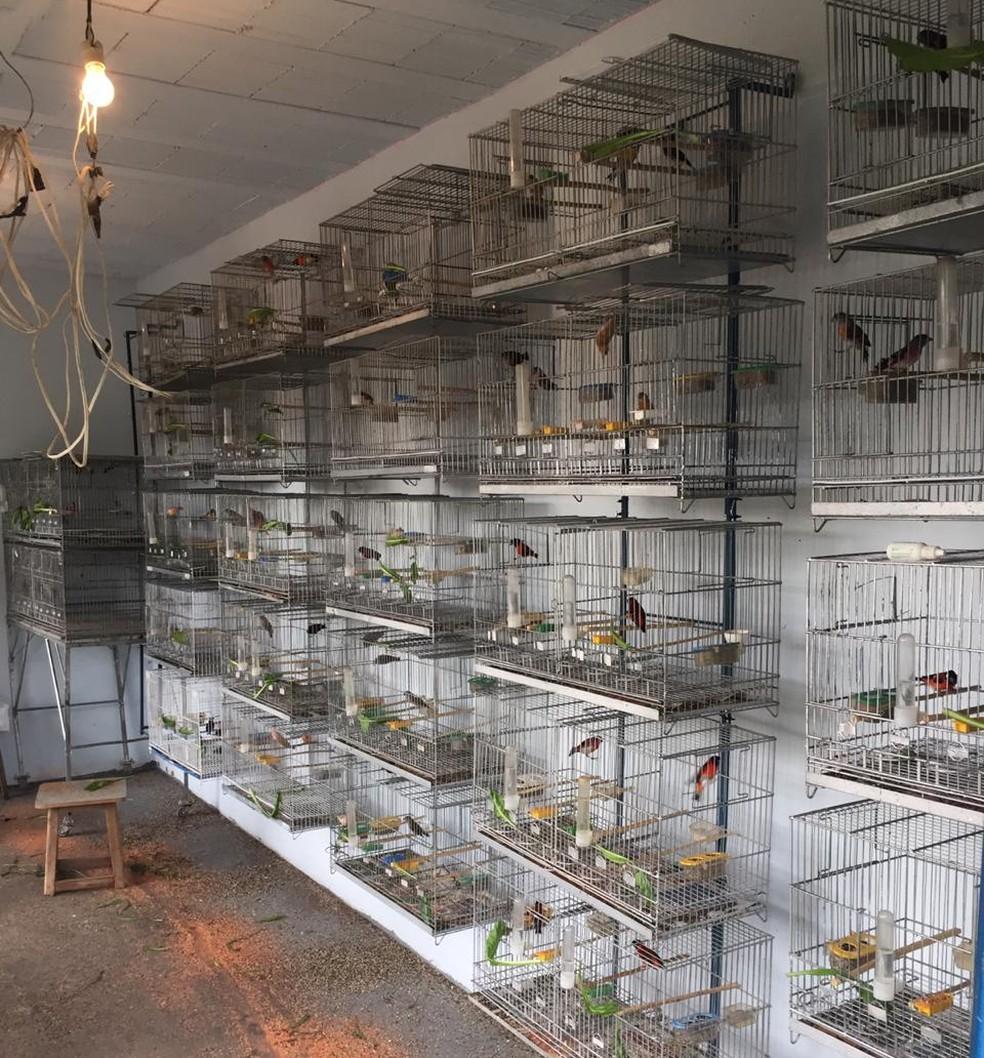 Aves mantidas em gaiolas vão permanecer com os homens multados em Piracicaba até que seja definida a destinação — Foto: Polícia Ambiental