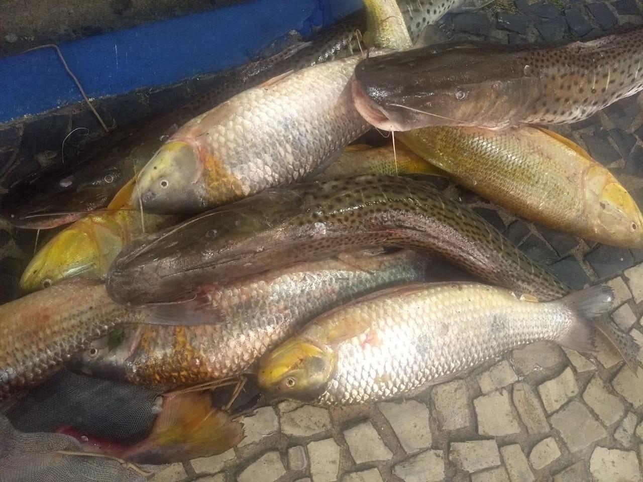 Polícia Ambiental apreende 31 kg de peixes e aplica multa de mais de R$ 1,3 mil em Adamantina