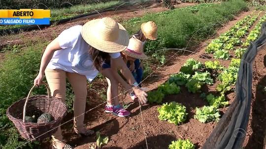 Família de Arroio do Meio cria 'colhe e pague' de produtos orgânicos