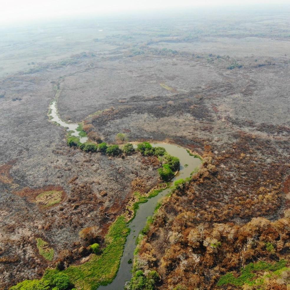 Foto feita durante os incêndios no Pantanal em 2020 — Foto: SOS Pantanal