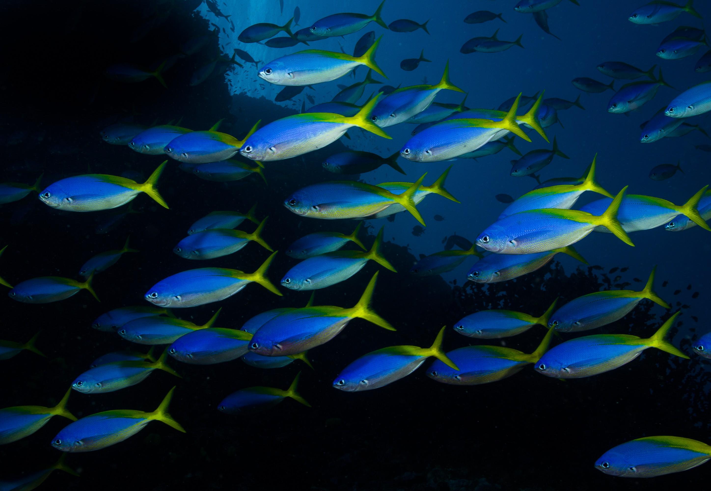 Estudo analisou o impacto na vida marinha (Foto: Wikimedia Commons)